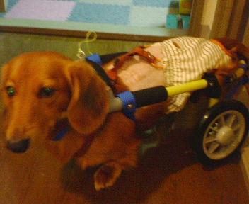 王子の車椅子